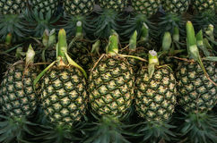 Pineapple. Green pineapples for sale in market Stock Photo