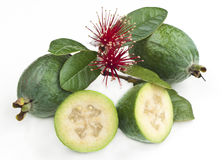 Pineapple guava with flowers. Fresh New Zealand feijoa fruit with leaves and flowers isolated on white royalty free stock image