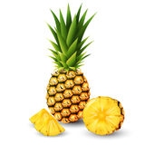 Pineapple and a half of pineapple, fruit, transparent, Vector, transparent. Eps10 Royalty Free Stock Image