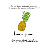 Pineapple Hand Draw Logo Color  Vector Stock Photography