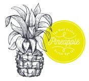Pineapple. Hand drawn vector tropical fruit illustration. Engraved style ananas fruit. Retro botanical illustration. Pineapple. Hand drawn vector tropical fruit stock illustration