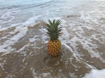 Pineapple on Hawaii beach Royalty Free Stock Image