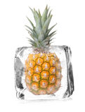 Pineapple in ice cube royalty free stock photography