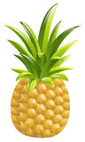 Pineapple icon illustration Stock Photos