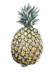 Pineapple illustration Royalty Free Stock Photography