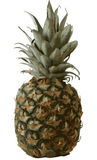 Pineapple -  image. Vector image, Pineapple on white isolated background Royalty Free Stock Images
