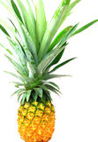 Pineapple isolate Royalty Free Stock Photo