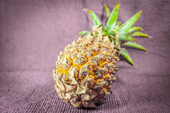 Pineapple isolate. One whole pineapple photographed on a white background royalty free stock image