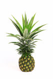 Pineapple. Isolate on white background Royalty Free Stock Image
