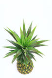 Pineapple. Isolate on white background Stock Images