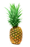 Pineapple isolated Royalty Free Stock Images