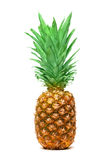 Pineapple Isolated Stock Photography