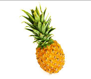 Pineapple on isolated background. Ripe pineapple on isolated background Royalty Free Stock Image