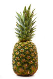 Pineapple isolated Royalty Free Stock Photography