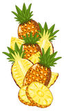 Pineapple isolated, Vector, composition. Royalty Free Stock Images