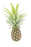 Pineapple. Stock Images