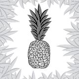 Pineapple isolated on white background. Vector illustration Stock Photos