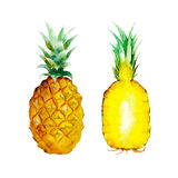 The pineapple isolated on white background, watercolor illustration fruit set. In hand drawn style Royalty Free Illustration