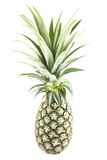 Pineapple isolated on white. Pineapple lying down- studio shot - white background Royalty Free Stock Photography