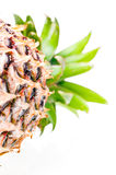 Pineapple laid down close up Stock Image