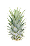 Pineapple leaf Royalty Free Stock Photography