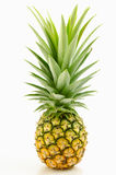 Pineapple with leaves. Stock Photography