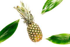 Pineapple and leaves on white background top view copyspace Stock Image