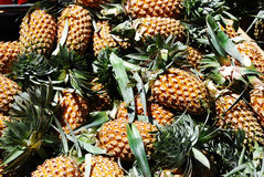 Pineapple in the market. Big bunch of tropical pineapples in crate Royalty Free Stock Photo