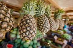 Pineapple in the market. Royalty Free Stock Photography