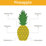 Pineapple nutrient of facts and health benefits, info graphic Stock Images