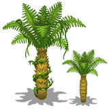 Pineapple palm tree on a white background. Vector Stock Photo