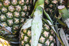 Pineapple Pandemonium. Pineapples together at the grocery store Stock Photography