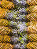 Pineapple pile Royalty Free Stock Photography