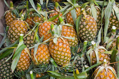 Pineapple pile Royalty Free Stock Photos