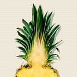 Pineapple. Fruit food tropical climate vitamin pill freshness leaf vector illustration