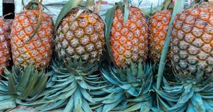 Pineapple Pineapples neatly arranged in row market royalty free stock image