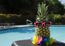 Pineapple by the pool. Funny pineapple in sunglasses by the pool Stock Images