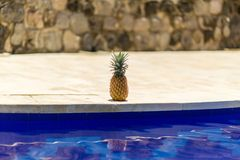 Pineapple at poolside royalty free stock image