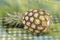 Pineapple - Popart Royalty Free Stock Photography