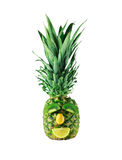 Pineapple portrait Stock Image