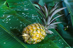 Pineapple raw food and fruit Royalty Free Stock Image