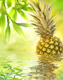 Pineapple reflected in water Royalty Free Stock Photography
