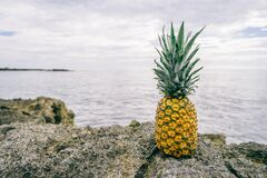 Pineapple on rocky coast Stock Images