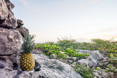 Pineapple on a Rocky Road Rock Stock Photography
