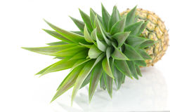 Pineapple's leaves on white background. Stock Images