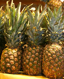Pineapple for sale in the local fruit market Stock Images