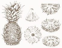 Pineapple set Stock Photography