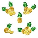 Pineapple set. Vector Stock Photos