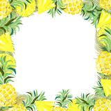 Pineapple and Slices Watercolor Summer Frame Vector Background. Beautiful Pineapple with its green crown of leaves, and its slices, round and triangular, created vector illustration