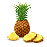 Pineapple with slices. Whole pineapple with round slices isolated on white background. Vector illustration Royalty Free Stock Images